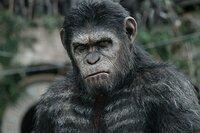 Planeta de los Simios: Confrontación